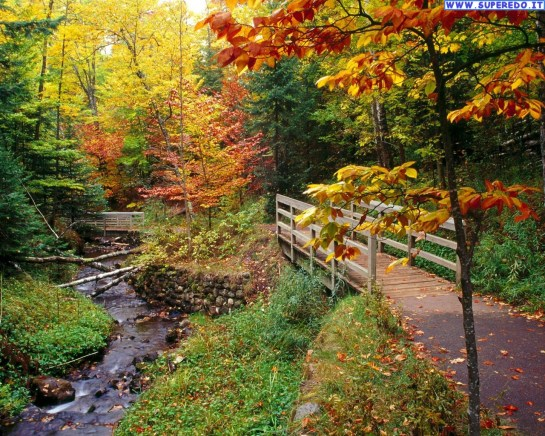 autunno_64
